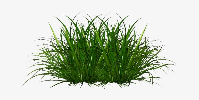 Картинки трава для детей, свадьбу
