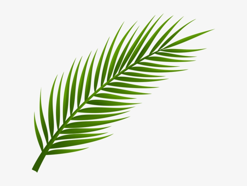 More Information - Palm Tree Leaf Png, transparent png #1507409