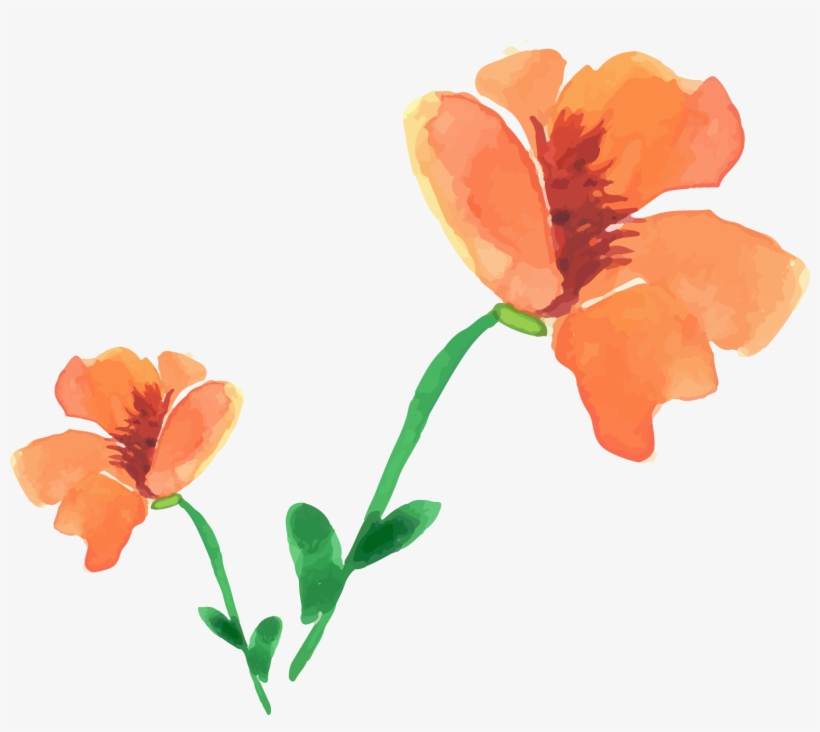 Watercolor Painting Flower Painted Floral Decoration - Watercolor Painting, transparent png #1555021