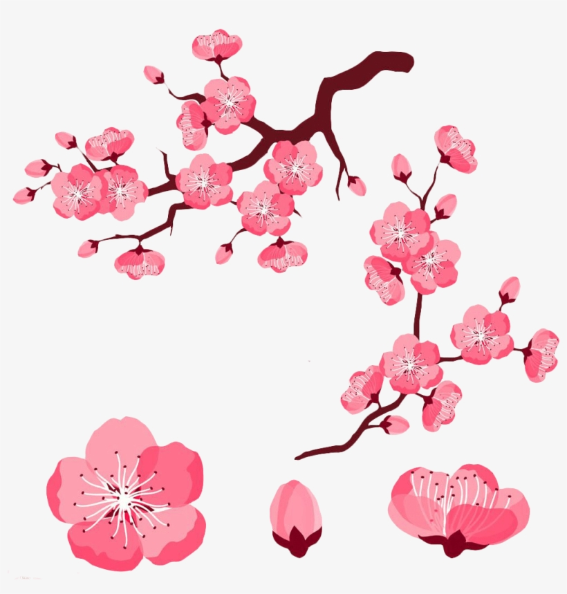 Cherry Blossom Petals Clipart 4 By Jared - Cherry Blossom Flower Cartoon, transparent png #1562581