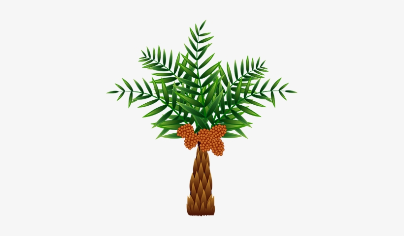 The Oil Palm, Which Was Originally Native To Africa, - Palm Oil Tree Clip Art, transparent png #1574562