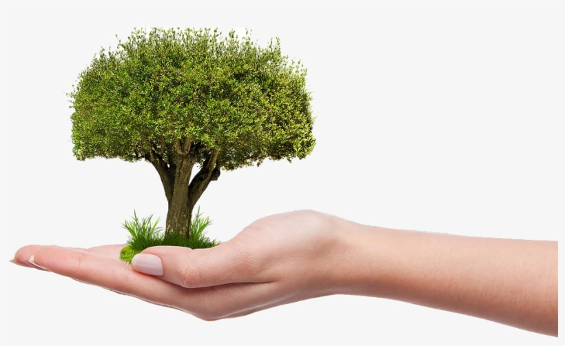 Save Tree Png Hd - Plant A Tree Png, transparent png #1587586