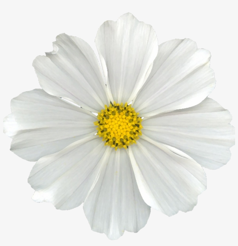 White Flower Png Clip Free Library - Daisy Flowers No Background, transparent png #162983