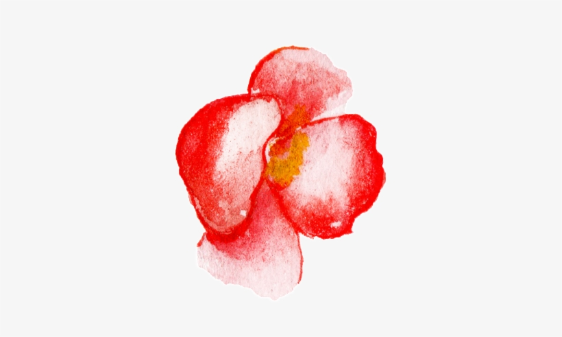Red Flower Watercolor Hand Painted Transparent - Watercolor Painting, transparent png #164732