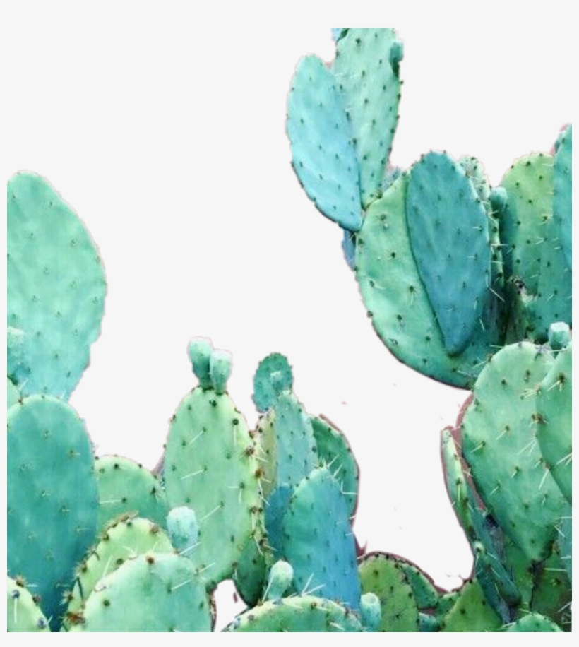 Aesthetic Cactus Wallpaper Iphone Free Transparent Png Download