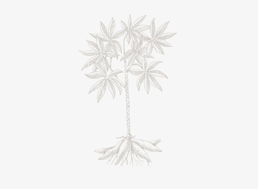 Imagenes De Una Planta Con Yuca Animadas, transparent png #1618095