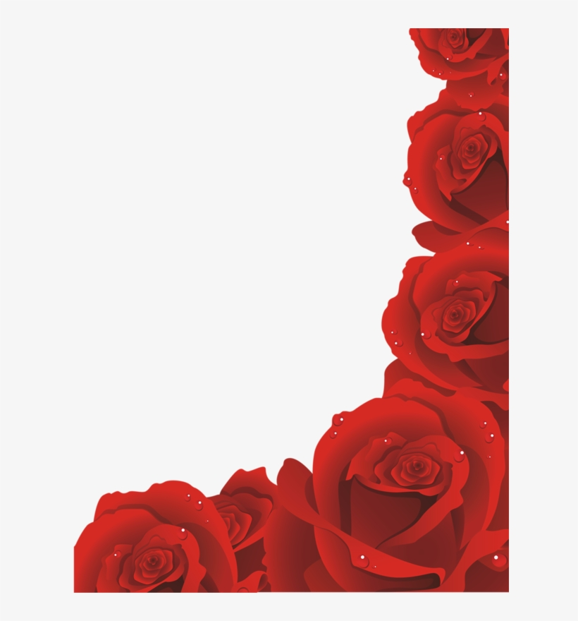 Page 81 Red Rose Png Red Rose Petals Red Roses Free Red Rose