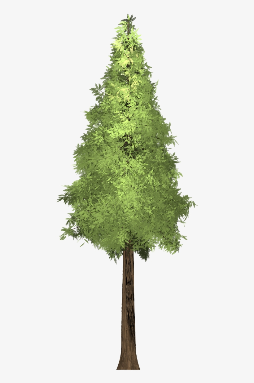 Forest, Redwood Tree Painted Tree Green Nature Pla - Painting, transparent png #1649805