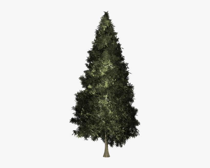 Welch Pine Christmas Tree, transparent png #1650115