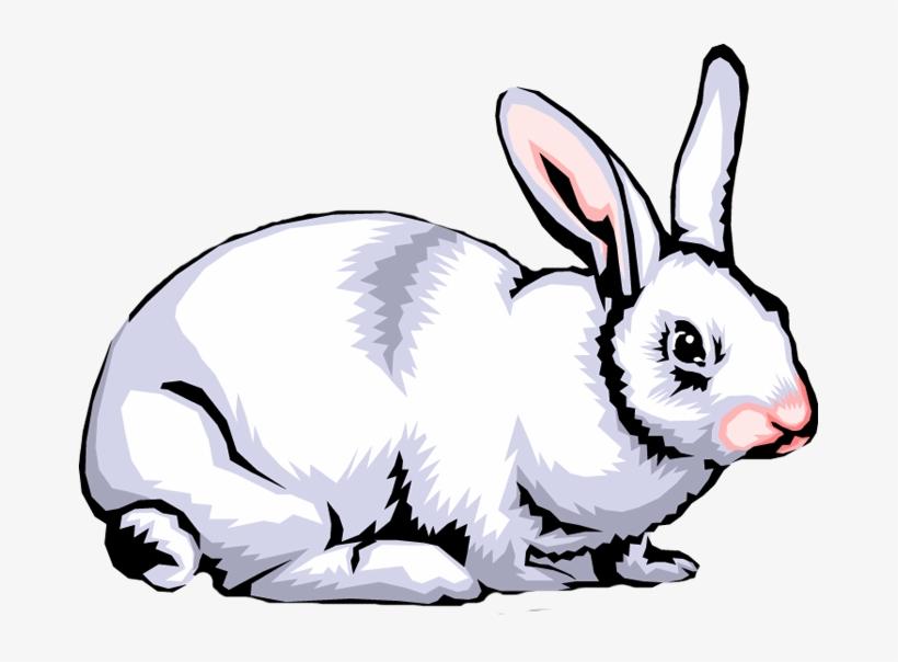 Rabbit Png Clipart - O Que São Seres Heterotroficos, transparent png #1655051
