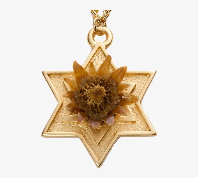 Rose Of Bethlehem Gold-filled Star - Rose Of Bethlehem - Gold Star Of David, transparent png #1672565