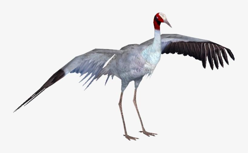 Cranesarus Tamara Henson - Sarus Crane Bird Png - Free