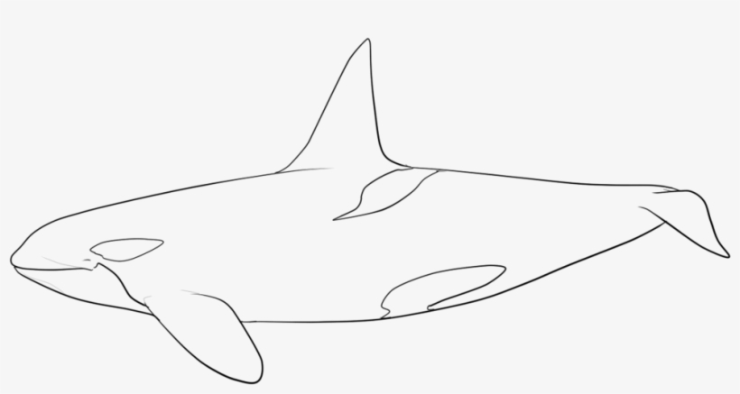 Killer Whale Orca coloring page | Free Printable Coloring Pages | 437x820