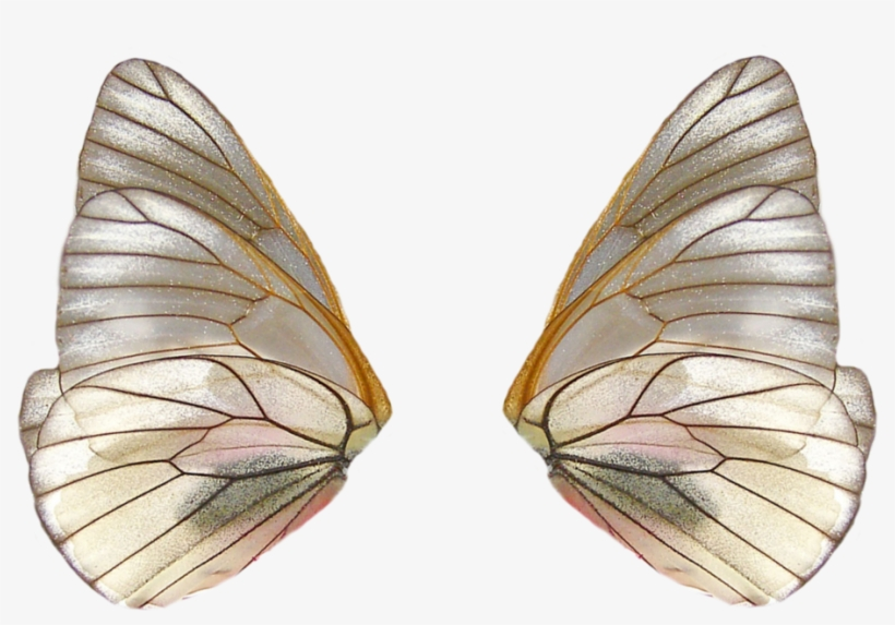 Share This Image - Fairy Wings Png, transparent png #1677159