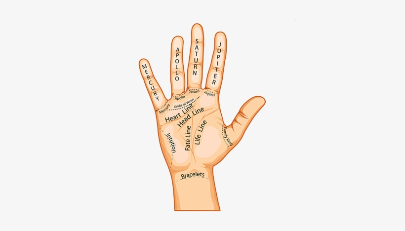 Palm Reading - Do Your Hand Lines Say About You, transparent png #1699780