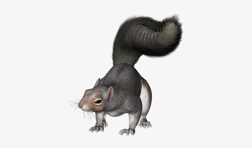 Squirrel - Grey Squirrel Clipart Png, transparent png #174420