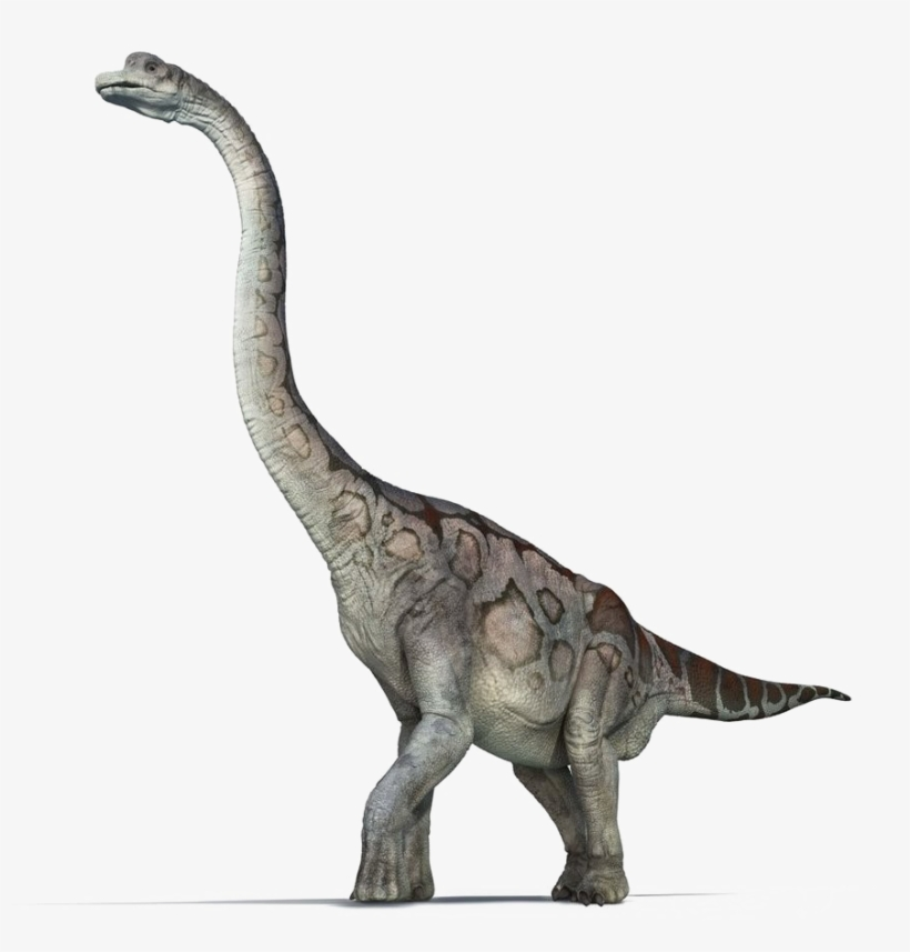 Brachiosaurus Png Pic - First Fact Dinosaurs (first Facts), transparent png #1711494