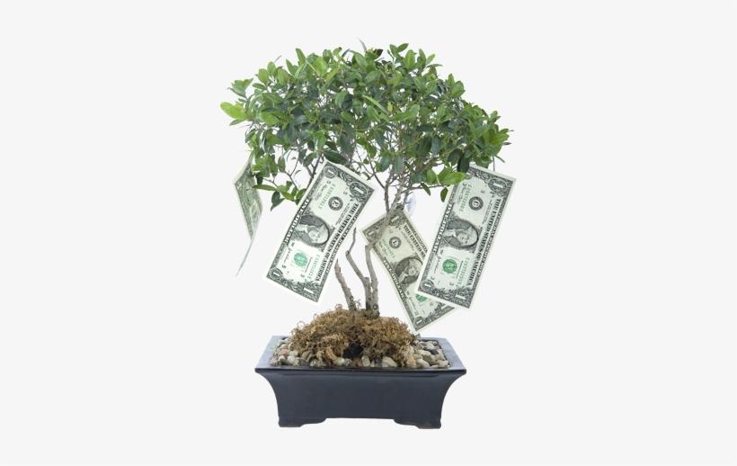 Money Tree - Money Blessings, transparent png #1735788