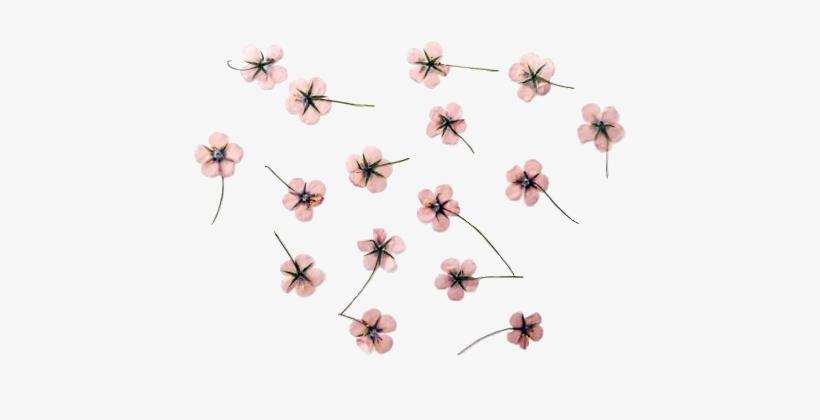 Cherry Blossom Clipart Transparent Tumblr Flores Tumblr Dibujos