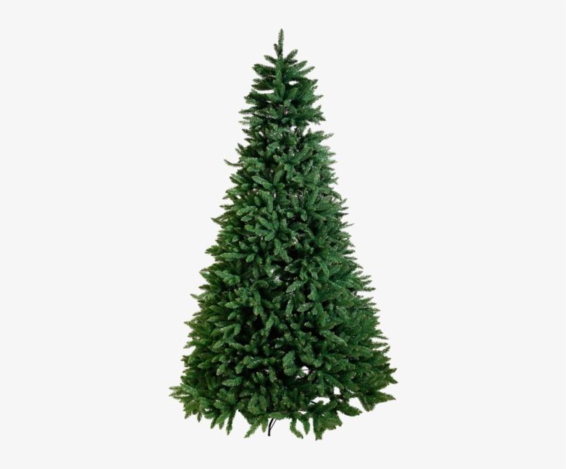 Christmas Tree Calgary - Fraser Fir Christmas Tree, transparent png #1794342