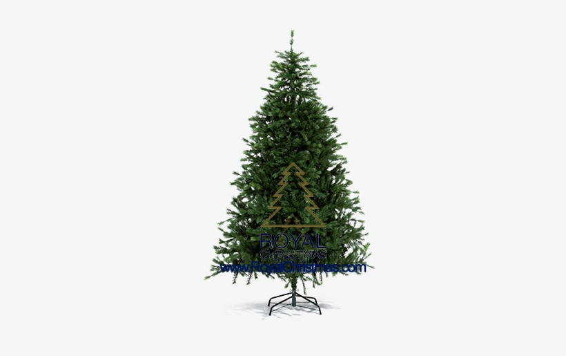 That Makes The Artificial Christmas Tree Look Realer - Pine Tree For Christmas, transparent png #1794922