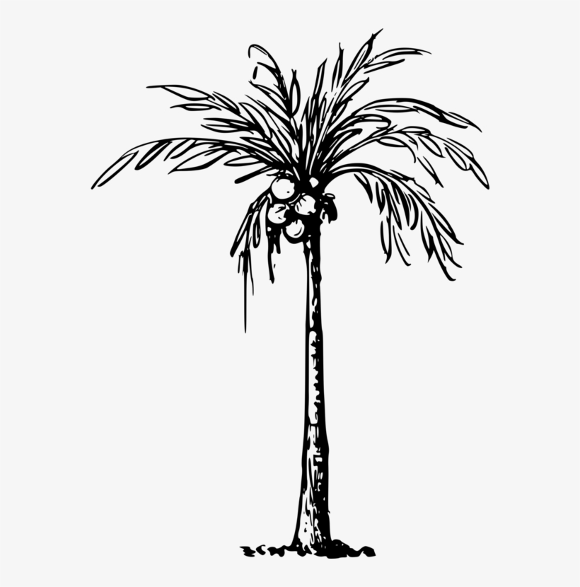 Coconuts Vector Tree Line - Clip Art Of Coconut Tree, transparent png #1796356