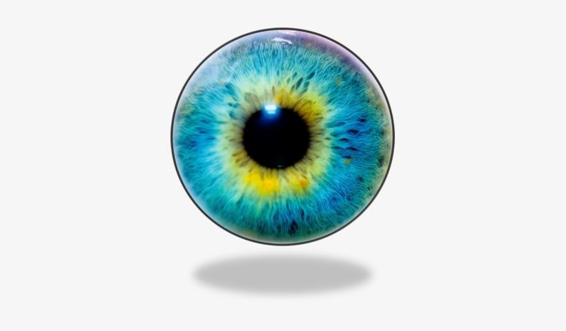 Eye Lens Eye Lens Png Eye Png Free Download - Optical Illusion Pic Of Animals, transparent png #181253