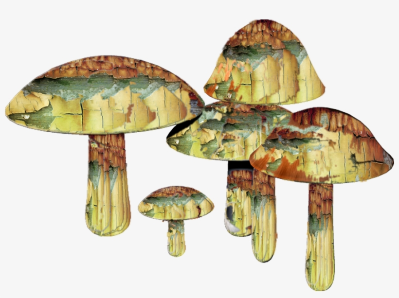 Mushrooms By Mysticmorning On - Mushrooms Drug Png, transparent png #188845