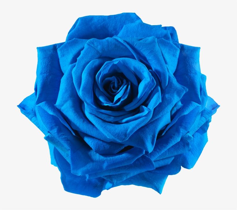 Rose Cut Flowers Transprent - Blue Flower Cut Out, transparent png #1806659