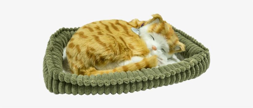 Perfact Petz Orange Tabby Kitten - Cat Grabs Treat, transparent png #1816510