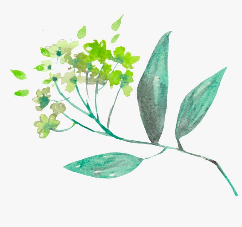 This Backgrounds Is Spring Fresh Plant Transparent - Spring, transparent png #1830477