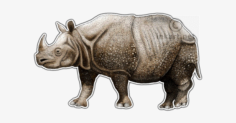 28 Collection Of Javan Rhino Drawing - One Horned Rhino Drawing, transparent png #1831592