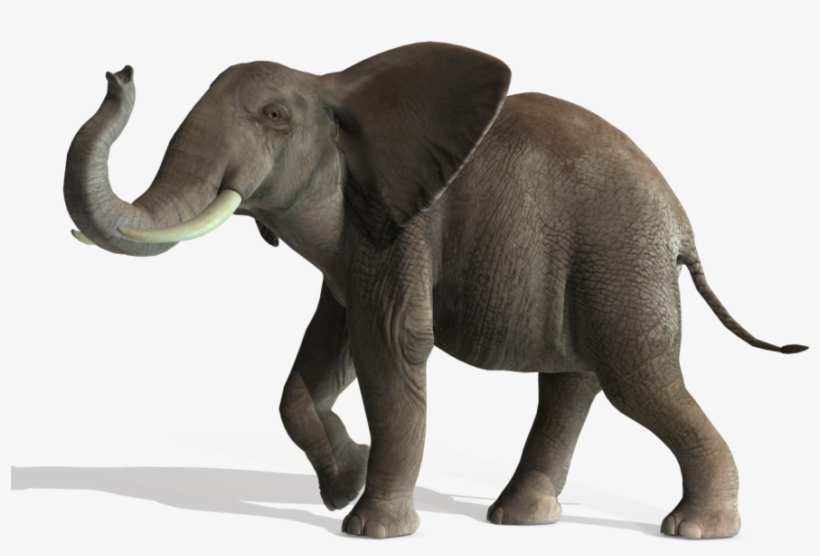 3d Elephant New Cashadvance6online Elephant Png File Free Transparent Png Download Pngkey Three species are recognised, the african bush elephant (loxodonta africana). 3d elephant new cashadvance6online