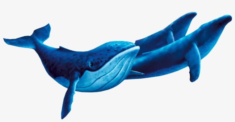 Humpback Whales - Humpback Whale Fantasia 2000, transparent png #1859299