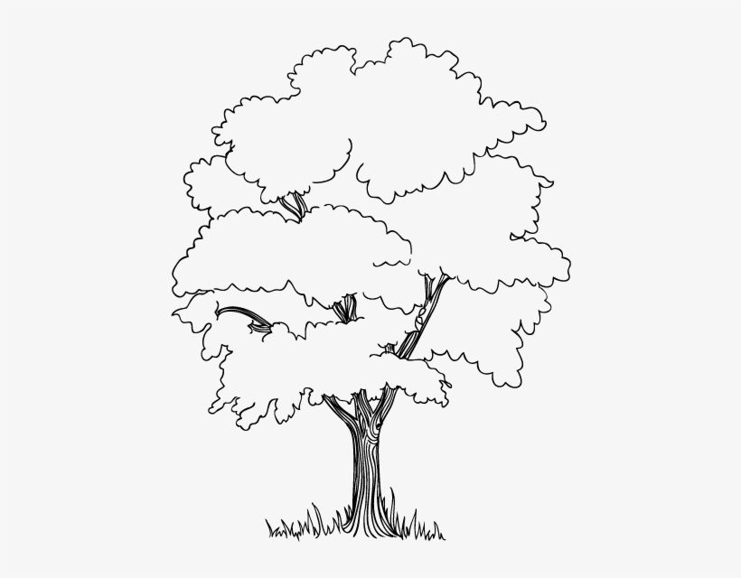 The Trees In Jungle Coloring Pages Embroidery Stuff - Jungle Tree Drawing Easy, transparent png #1860354