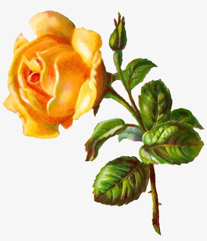 Go To Image - Rose Flower Digital, transparent png #1868387