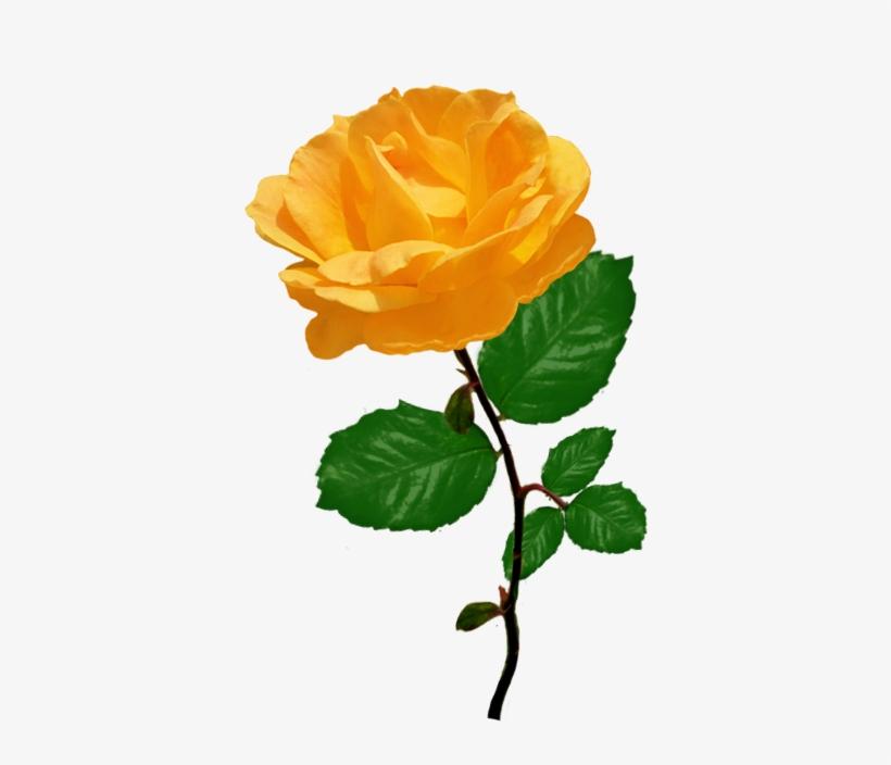 Red Red Rose Clipart - Orange Rose Clipart, transparent png #1868482