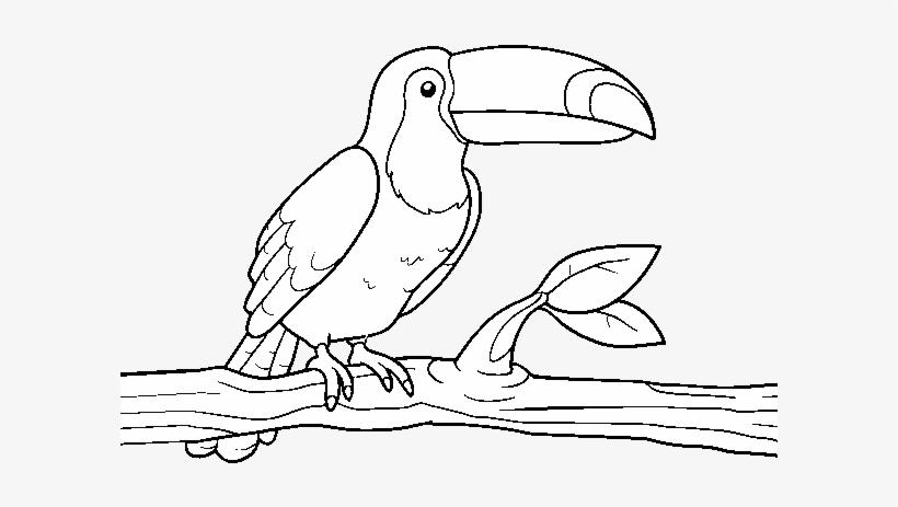 Dibujo De Un Tucán Para Colorear Imagenes De Tucanes Para
