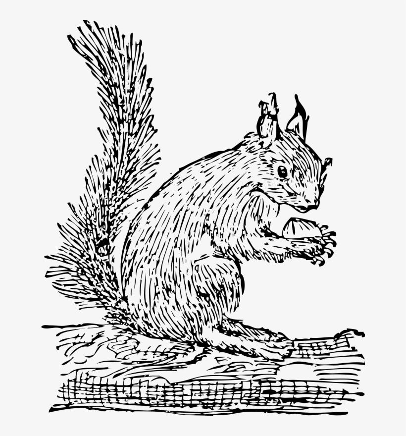Squirrel Clip Art Free Vector - Squirrel Clip Art, transparent png #194274