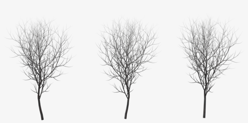 Tree Winter Png - Birch Tree Winter Png, transparent png #196955