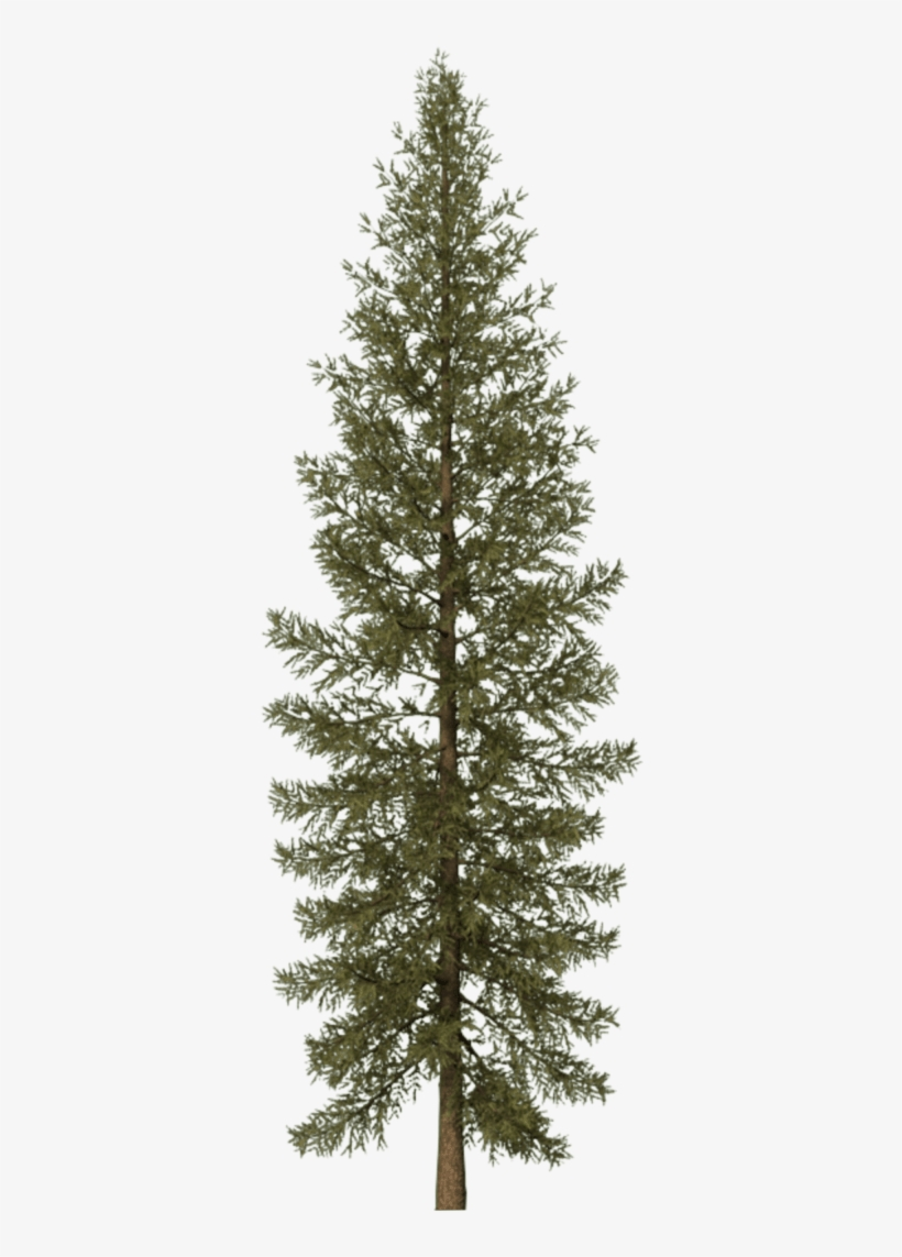 Pine Tree Png Svg Black And White - Douglas Fir Tree Png, transparent png #199828