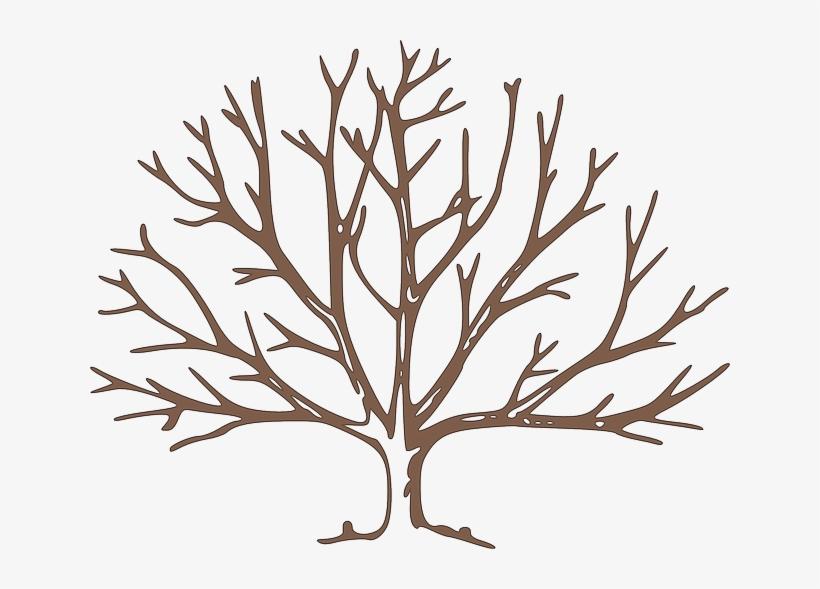 Partes Del Árbol Frutal - Draw A Winter Tree, transparent png #1907625