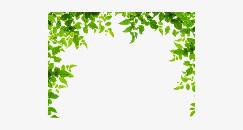 Leaf Borders Png - Leaf Borders And Frames, transparent png #1918151