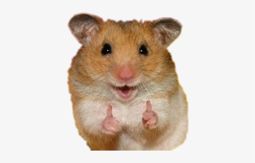 Two Thumbs Up Animals, transparent png #1953572