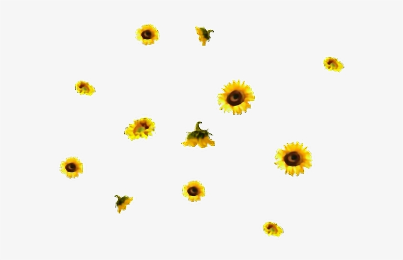 Flores Sticker Aesthetic Sunflower Transparent Background Free