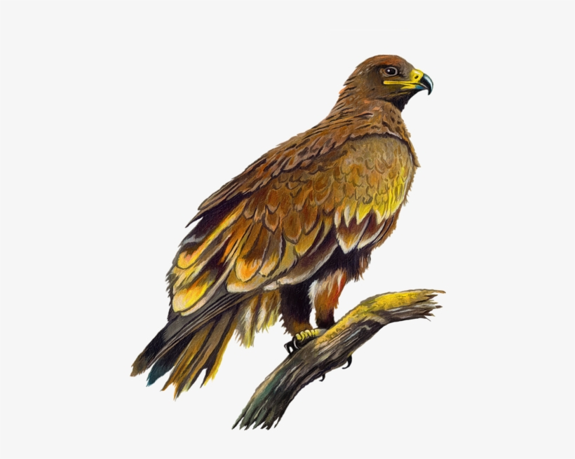 Click And Drag To Re-position The Image, If Desired - Eagle, transparent png #21699