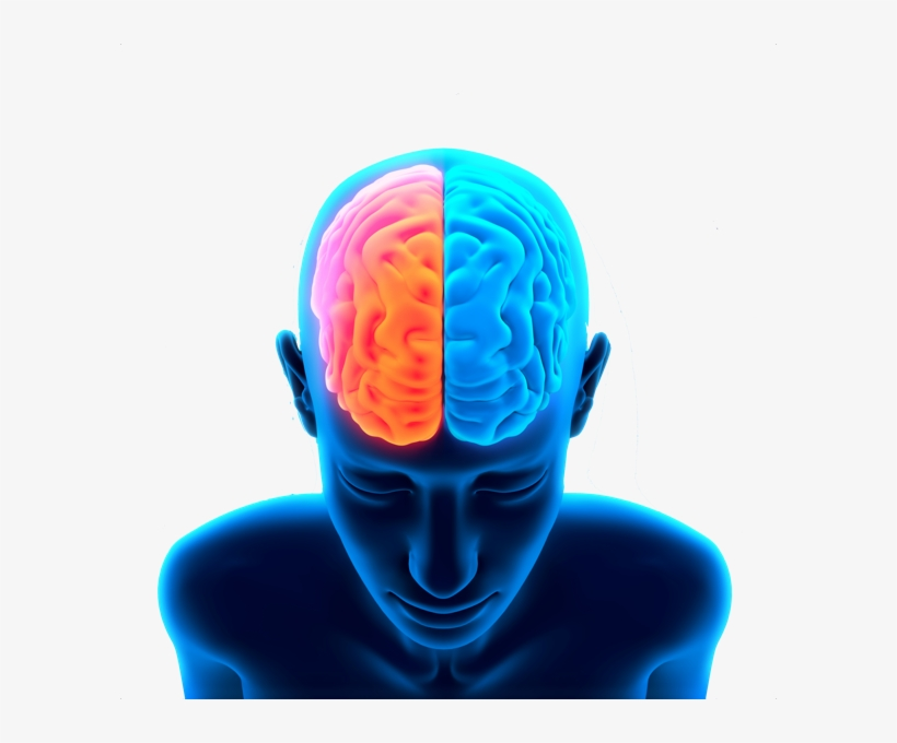 Brain Free Png Image - X And Y System: How Thinking Creates, transparent png #22500