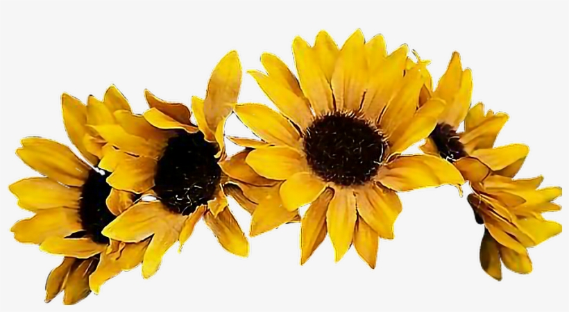 Sunflower Flowercrown Coronadeflores Flowers Floresfall - Yellow Flower Crown Png, transparent png #22839