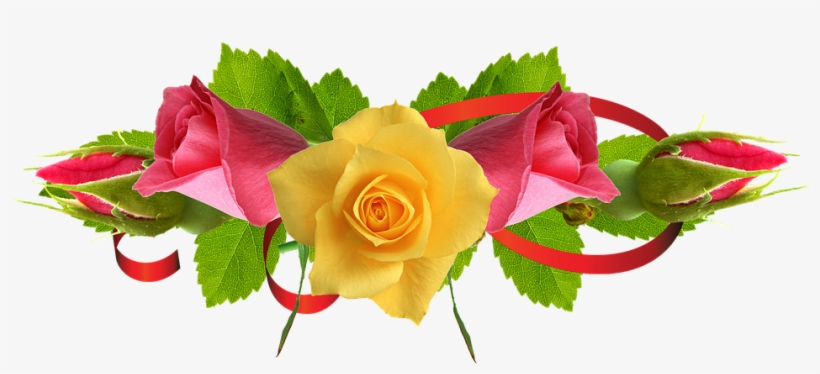 Yellow Rose Flower Free Png Transparent Images Free Yellow Rose