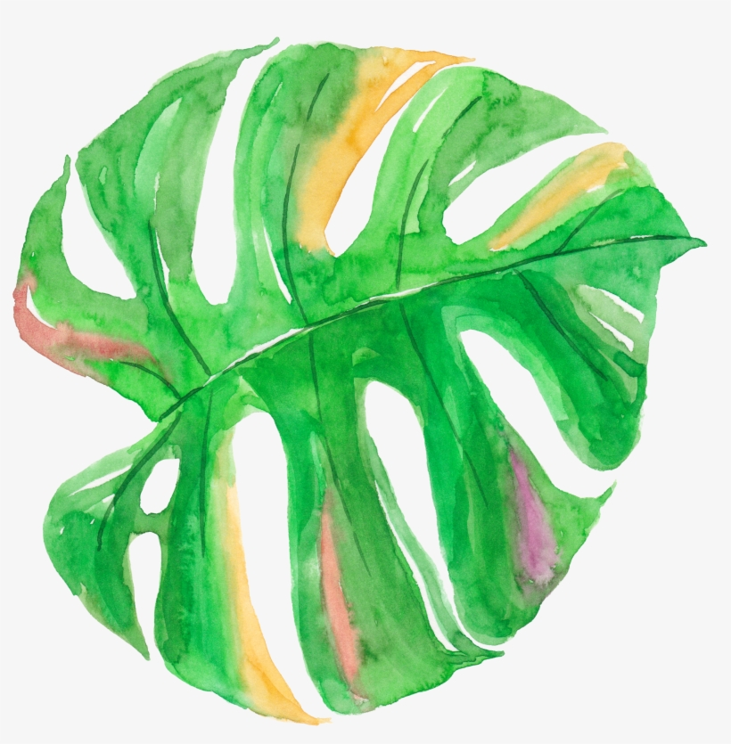 Tropical Leaf Watercolor Png Banner Library Download, transparent png #23460